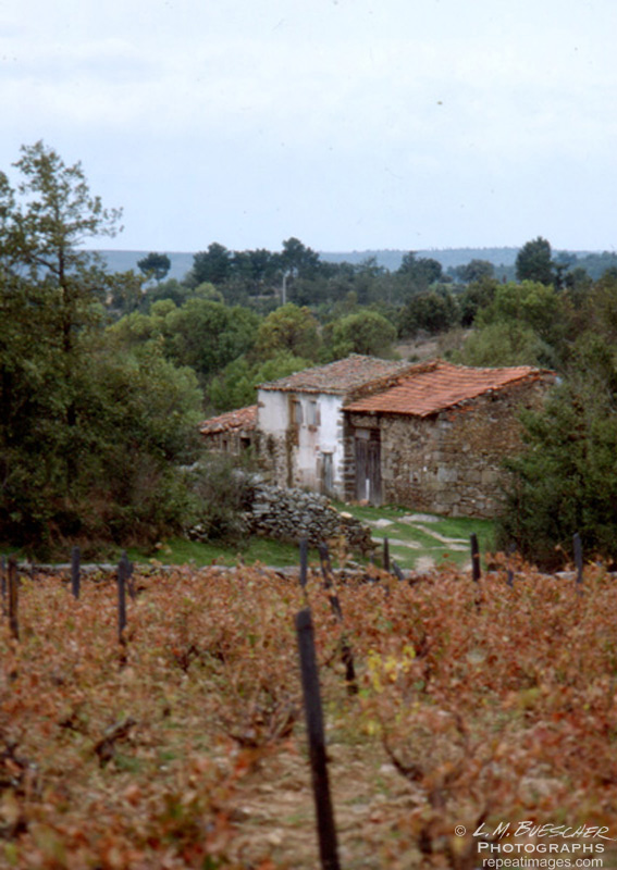 portugese vineyard